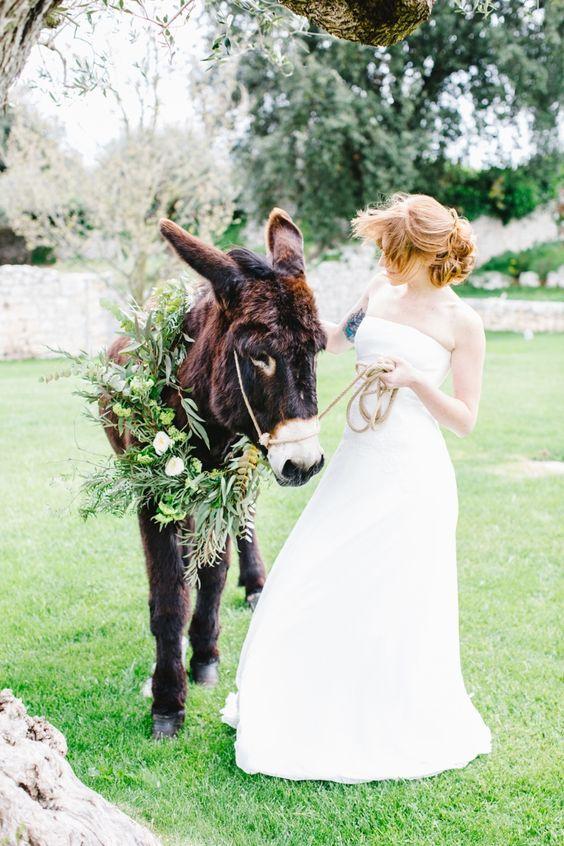 sposa-asino-natura